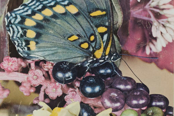 """Red Spotted Purple"": Roman Vishniac's Science Work"