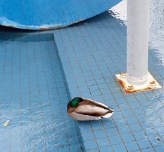 Emile Rubino, Fountain With Duck. © Emile Rubino